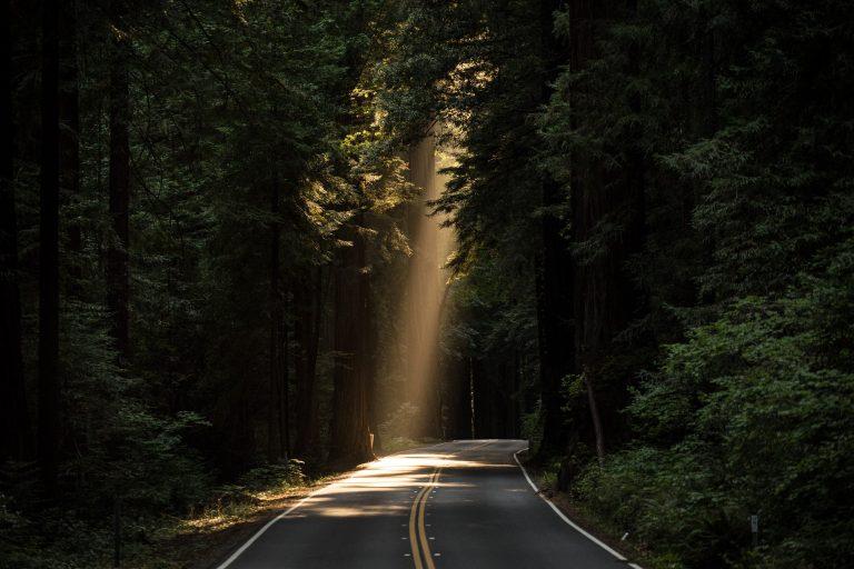Straße, die durch einen Wald verläuft